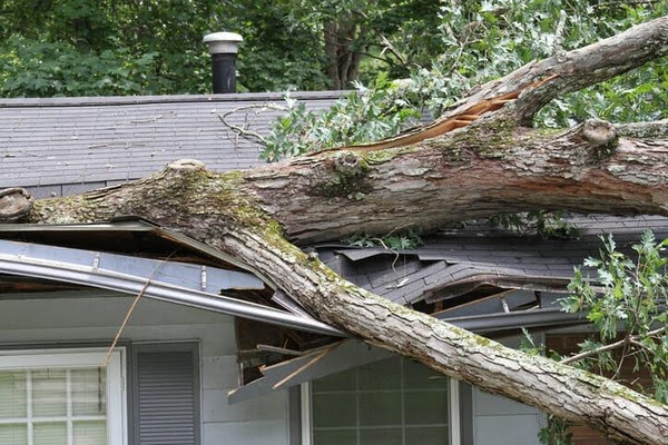 fallen tree cleanup services