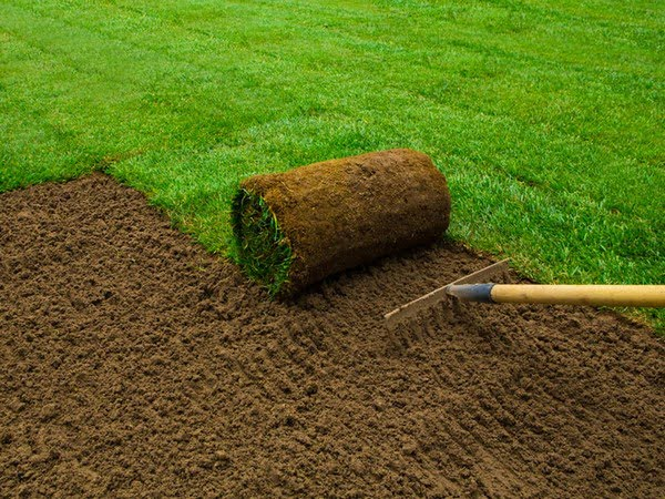sod and hydro seed installation expert spokane